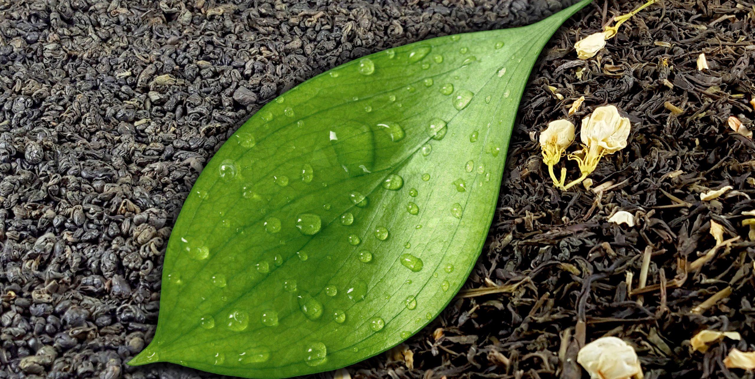 Exotic Gourmet Teas - Green, Black, Jasmine, Etc