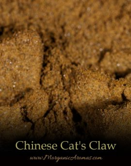 Chinese Cat's Claw (Uncaria rhynchophylla) - SpecialTeas
