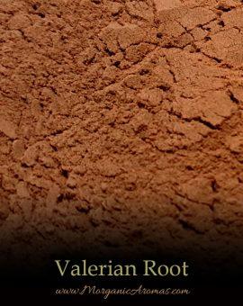 Valerian (Valeriana Officinalis) - SpecialTeas